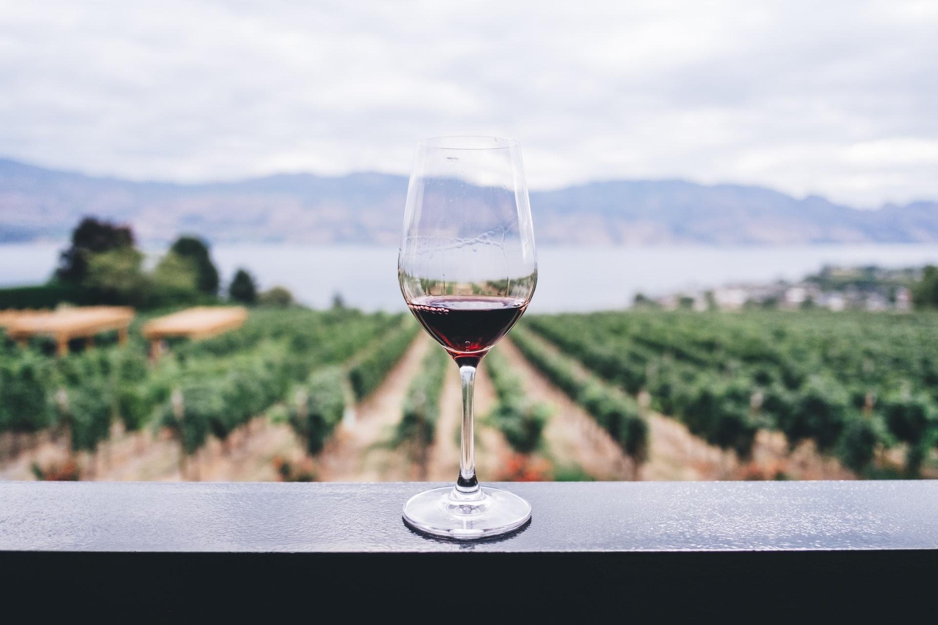 Bliv vinekspert